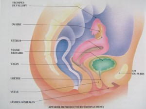 31-LA-FEMME-ET-LES-TROUBLES-menopause