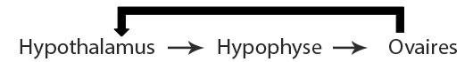 hypothalamus-ovaires